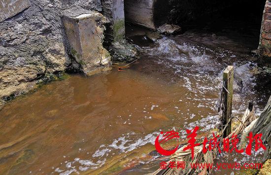 湴湖村的一个非法排污口正进行污水排放
